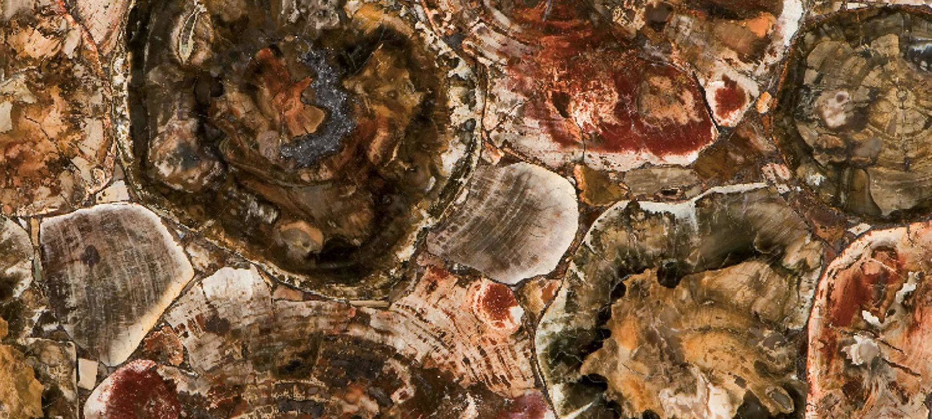 8330 Petrified Wood Concetto